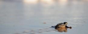 SVE di 2 mesi in Turchia per la salvaguardia delle tartarughe marine