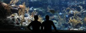 Servizio Volontario Europeo in Danimarca in un acquario