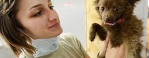 LAST MINUTE: Sve a Lisbona sul tema protezione e difesa degli animali